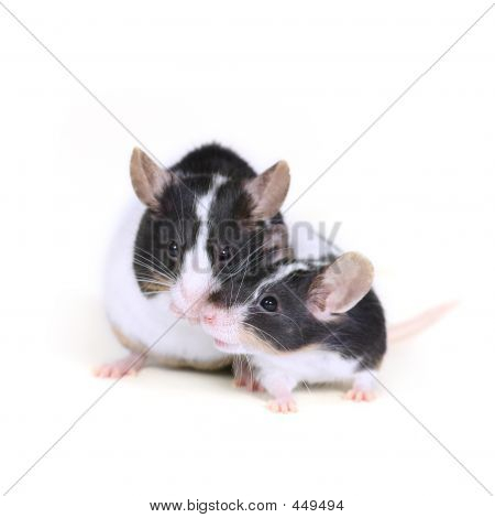 Mice In Love 2