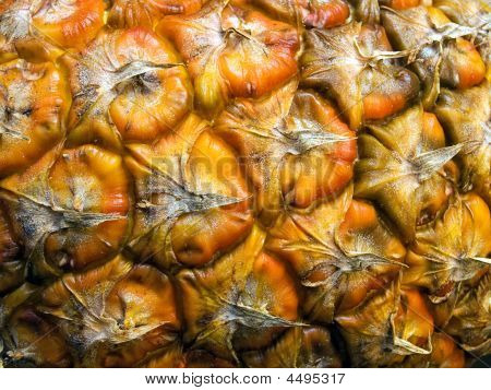 Bark Of Pineapple