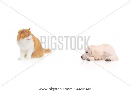 Gato olhando para um cão