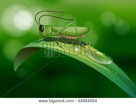 Illustration of a grasshopper in a long leaf