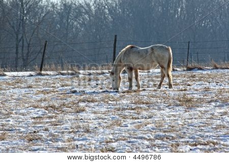 Brown And White Horse In Snow