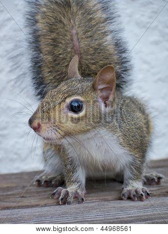Squirrel backyard woods wildlife