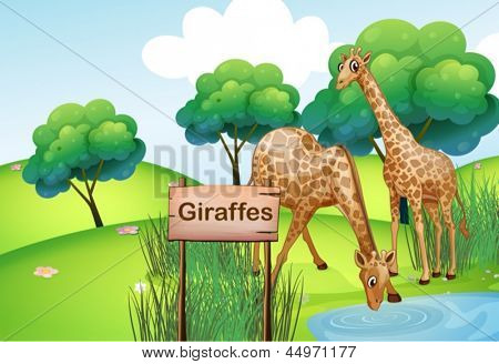 Illustration of the two giraffes at the forest with a wooden sign board