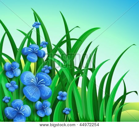 Illustration of a garden in the hill with blue flowers