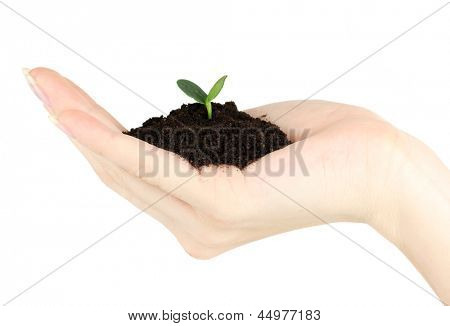 Green seedling growing from soil in hand