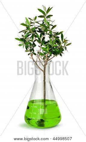 Tree Growing In Laboratory Test Beaker