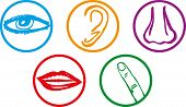stock photo of sensory perception  - Five senses icon set  - JPG