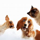 stock photo of puppy kitten  - Three home pets next to each other on a light background - JPG