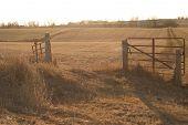 Golden Glow On A Iowa Landscape