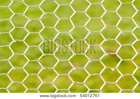 Frozen Chicken Wire
