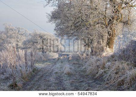 Hoar Frost, England