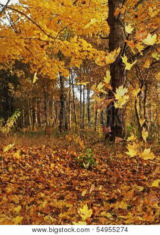 Autumn forest - 5.