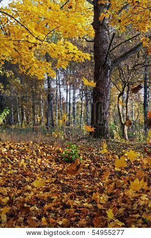 Autumn forest - 4.