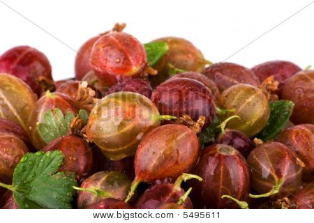 Gooseberries Macro With White Background
