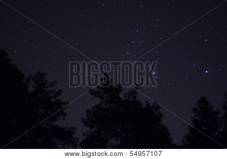 Orion over Ukrainian forest. Near Kiev