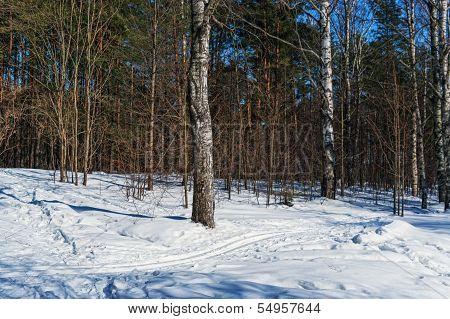 Ski track in winter park.