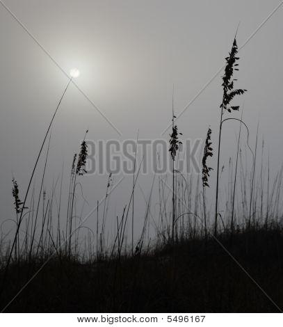 Dune, Fog And Sun