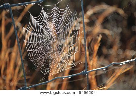 5D_5184_net_on_fence