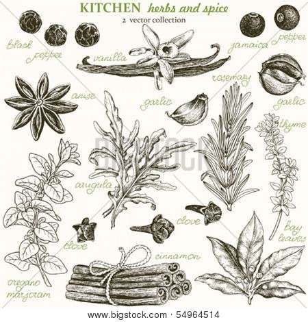Kitchen herbs and spice, vector collection 2.