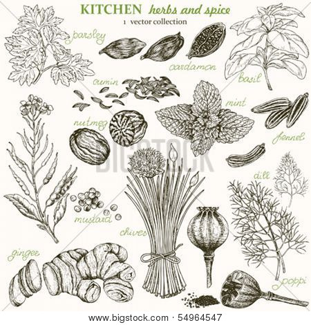 Kitchen herbs and spice, vector collection 1.