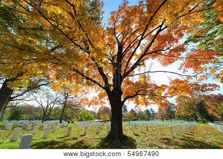 Arlington National Cemetery near to Washington DC, in Autumn