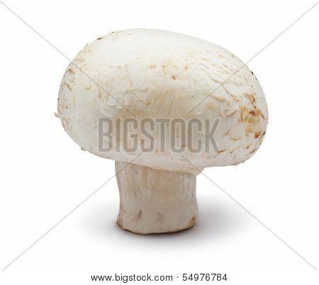 Champignon mushroom