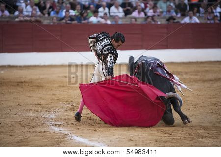 Bullfighter Ivan Fandi�o bullfighting with the crutch in the Bullring of Baeza