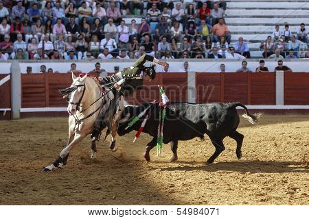 Spanish bullfighter on horseback Diego Ventura putting the bull banderillas bull fixes its horns in