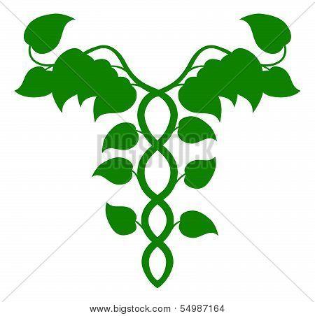 Holistic Medicine Caduceus