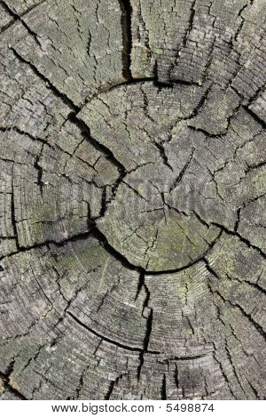 Split Tree Trunk