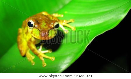 A Frog On A Leaf