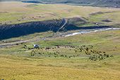 stock photo of yurt  - Livestock pasturing near yurt - JPG