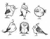 image of robin bird  - Funny cartoon birds - JPG