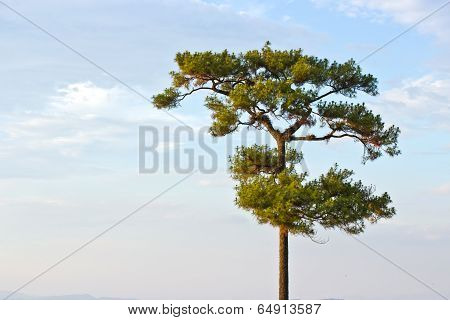 Single Tree On The Field, Beautiful Natural Summer Landscape, Pine Tree Over Blue Sky