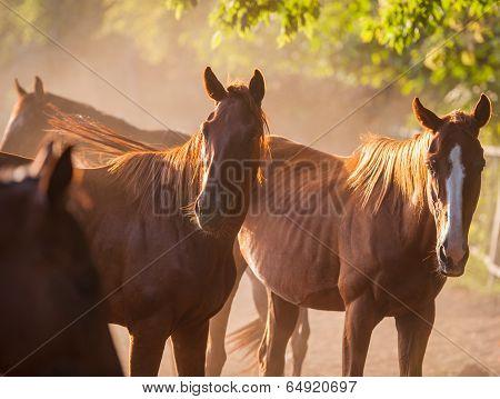 Herd Of Horses