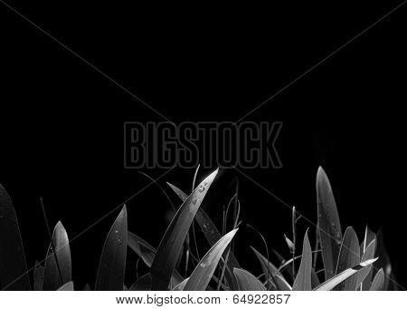Leaves On Black