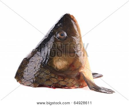 Close up of carp head.