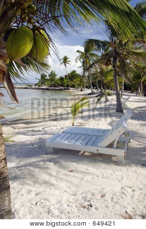 Coconut Chairs