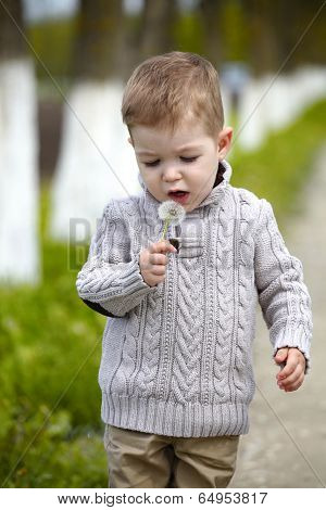 2 Years Old Baby Boy With Dandelion