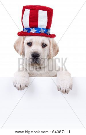 Patriotic Labrador puppy dog holding sign or banner