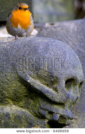 Robin And Skull