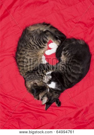 Cats Cute Couple Heart Love Animal
