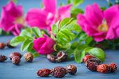 stock photo of wild-brier  - fruits and flowers of wild rose on a wooden table