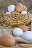 pic of hen house  - Fresh free range eggs on a stand in the hen house - JPG