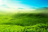 image of cameron highland  - Landscape view of tea plantation with blue sky in morning - JPG
