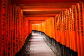 pic of inari  - Fushimi Inari Taisha Shrine in Kyoto Japan