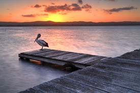 picture of jetties  - Sunset at Long Jetty NSW Australia. A pelican roosts on one of the jettys on Lake Tuggerah as we admire the sunset.