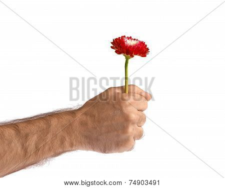 Red Flower In Man Hand