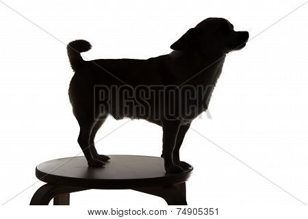 Silhouette of a dog chihuahua in profile