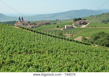 Summer in Beaujolais